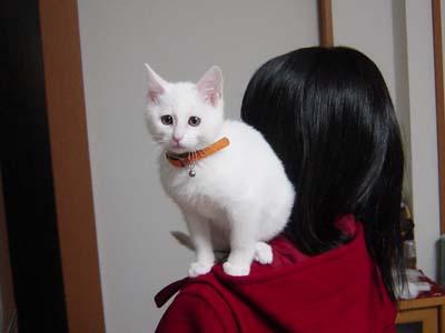 cat77