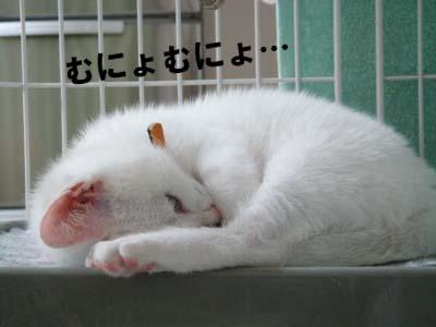 cat78