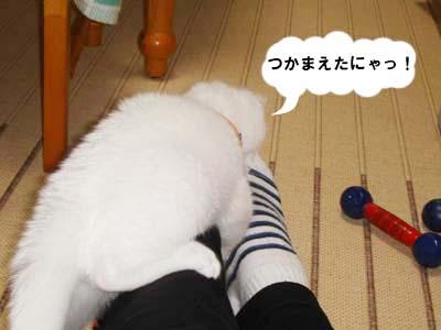 cat80