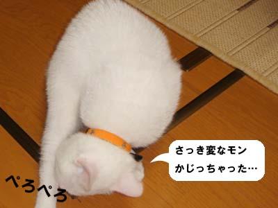 cat82