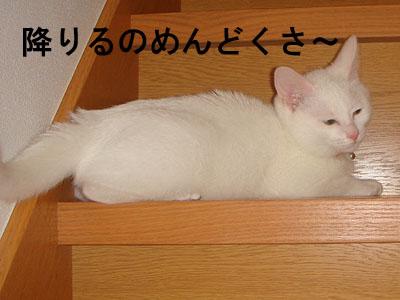 cat91