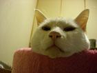 kochibikun.jpg