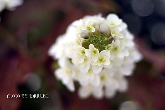 kasiwaba2.jpg