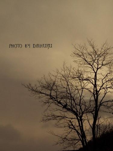 tree1_20080306000236.jpg