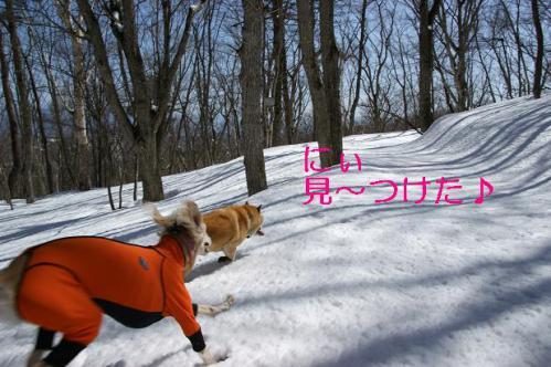 春うららの雪遊び6