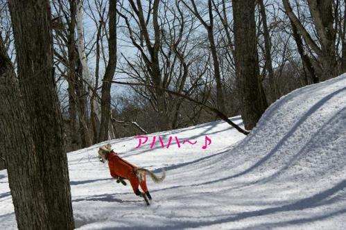春うららの雪遊び8