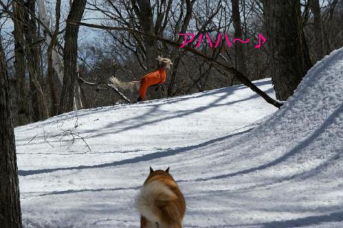 春うららの雪遊び9