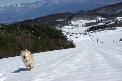 春うららの雪遊び12