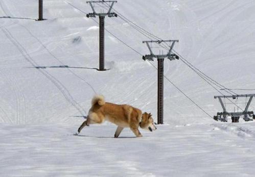 春うららの雪遊び13
