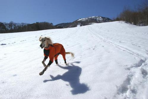 春うららの雪遊び16