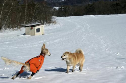 春うららの雪遊び21