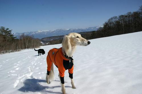 春うららの雪遊び25