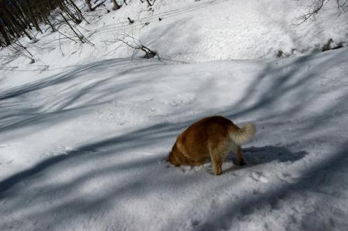 春うららの雪遊び4