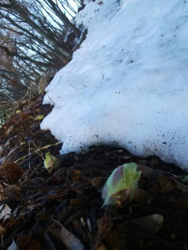 なごり雪と春雷15