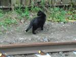 景色 2011年6月26日 浅野駅 線路近くにいた猫