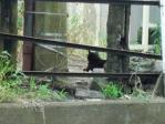 景色 2011年6月26日 浅野駅 猫が逃げた先