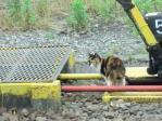 景色 2011年6月26日 扇町駅 尻尾のない猫