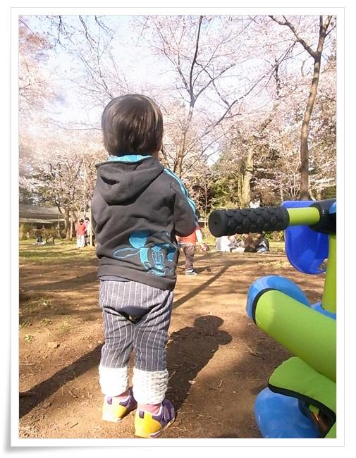110406sakura2.jpg