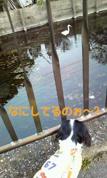 110203_1741+020001_convert_20110203201339.jpg