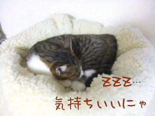 20061104151015.jpg