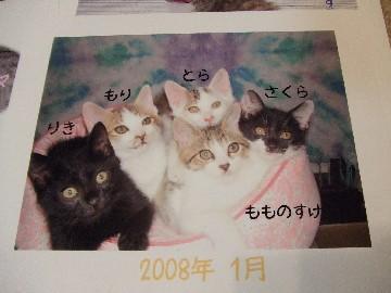 2007_12270084_1.jpg