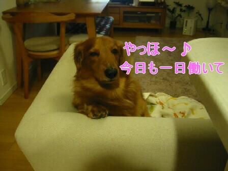 20080302_001444595.jpg