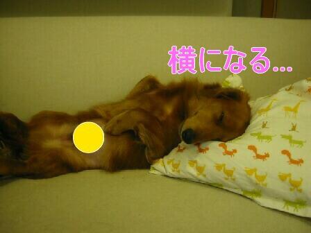20080302_001508319.jpg