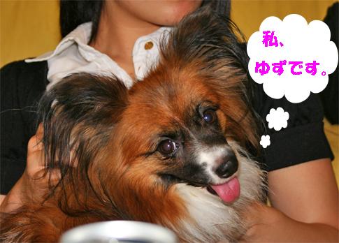 yuzu090924-1.jpg
