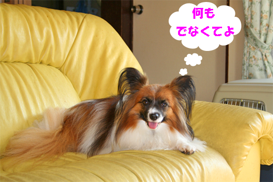 yuzu090924-2.jpg
