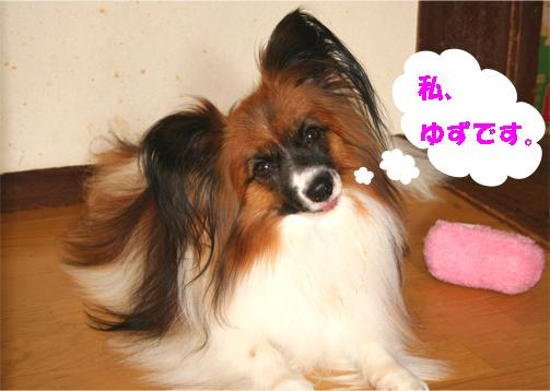 yuzu090925-1.jpg