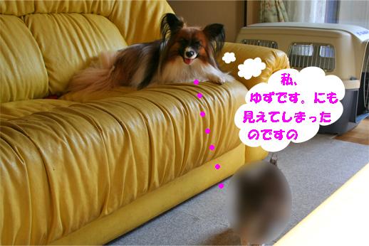 yuzu090925-2.jpg