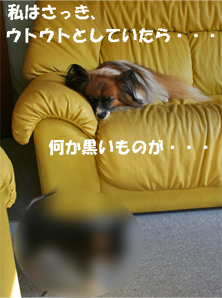 yuzu090925-3.jpg