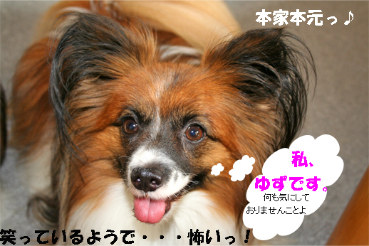 yuzu091001-1.jpg