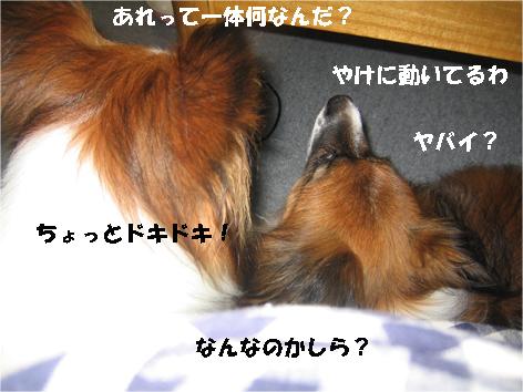 yuzukota090925-1.jpg