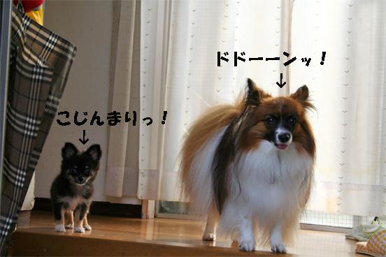 yuzukuru091008-1.jpg