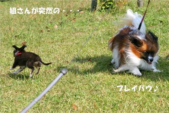 yuzukuru091018-1.jpg
