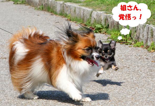 yuzukuru091018-2.jpg