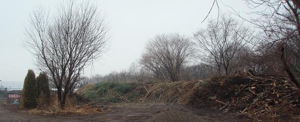 剪定枝の山2