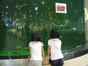 とれとれ水族館