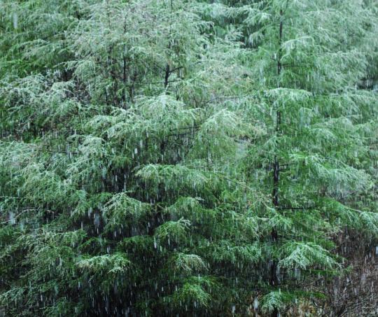 2011.05.24-雪降り-6