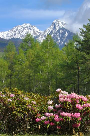 2011.05.24-八ヶ岳-12