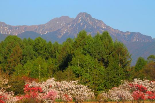2011.05.18-八ヶ岳-17