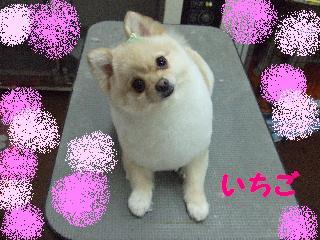 2008_02290034.jpg