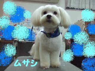 2008_02290040.jpg