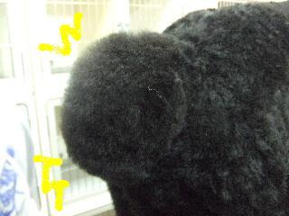 2008_02290045.jpg