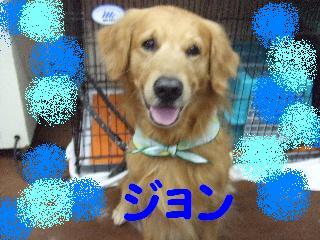 2008_03070017.jpg