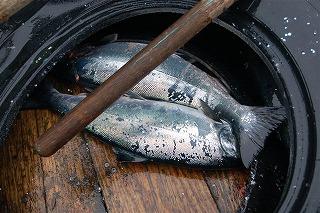 船で鱒釣りその3