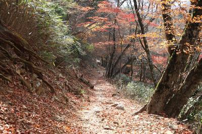 雲取山 紅葉の登山道