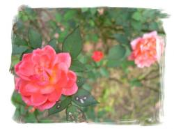 frame7518777.jpg