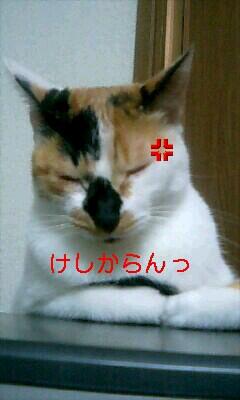 PA0_0013.jpg